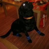 Kipper with doggie socks.